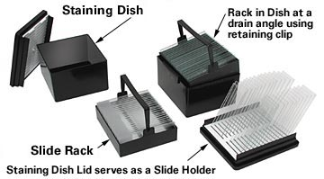 slide staining system